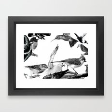 A Volery of Birds Framed Art Print