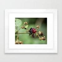 Berry Ripening Framed Art Print