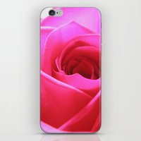 Pink Roses #3 iPhone & iPod Skin