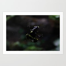 Poison Dart Frog- Leucomelas Belly Art Print