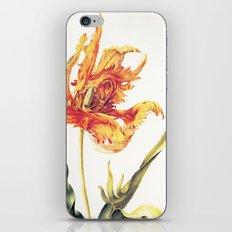 V. Vintage Flowers Botanical Print by Anna Maria Sibylla Merian - Parrot Tulip iPhone & iPod Skin
