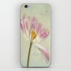 Tulipa polychroma iPhone & iPod Skin