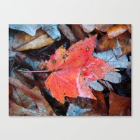 Autumnal Reverie 646 Canvas Print