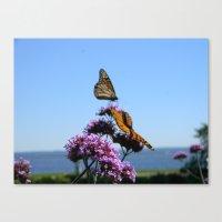Velvet Butterflies Canvas Print