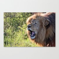 Growling Lion Canvas Print
