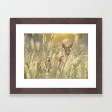 Sneaky Kangaroo in the Evening Sunset Framed Art Print