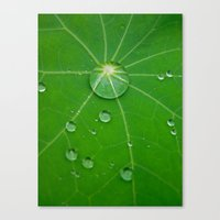 Water Pearls Canvas Print