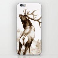 Elk In The Roar iPhone & iPod Skin