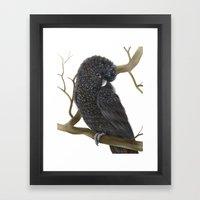 Glossy Black Cockatoo Framed Art Print
