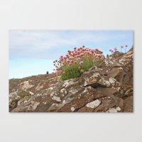 Giant's Causeway Flowers Canvas Print