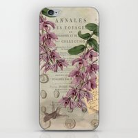 Hummingbirds iPhone & iPod Skin