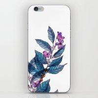 Botanical Study Of A Cof… iPhone & iPod Skin