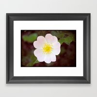 Moody Dog Rose Framed Art Print
