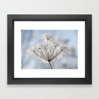 Queen Anne's Lace Covere… Framed Art Print