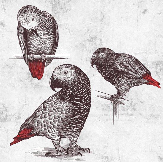Three Grey Parrots Canvas Print