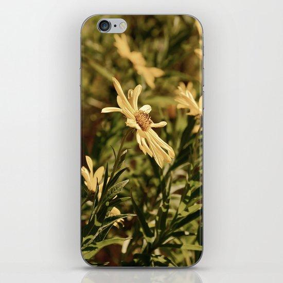 Sunward iPhone & iPod Skin