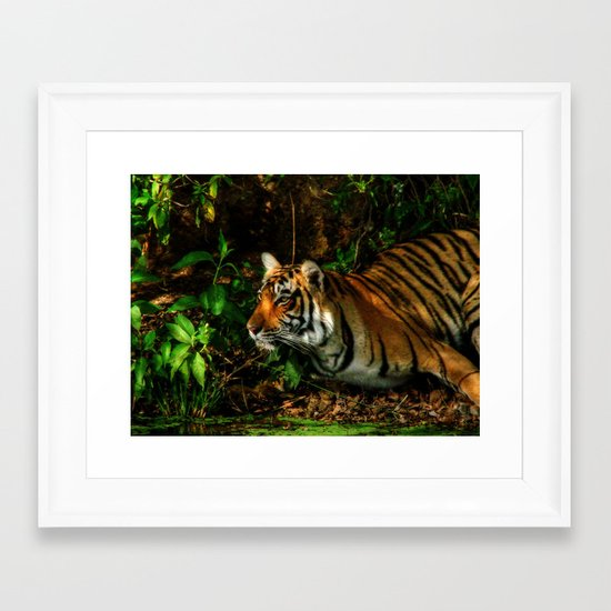 Bengal Beauty Framed Art Print