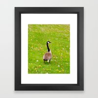 Goose in a field of flowers Framed Art Print