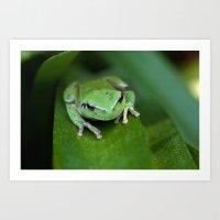 Green frog 20 Art Print