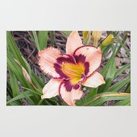 Pink Daylily Growing In … Rug