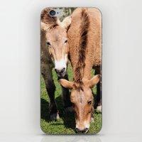 Przewalski Horses iPhone & iPod Skin