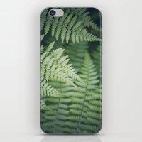 Where the Redwood Fern Grows iPhone & iPod Skin