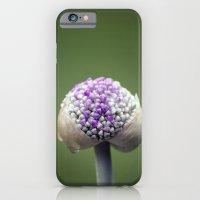 Starting Allium iPhone 6 Slim Case