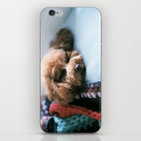 Sleeping Puppy iPhone & iPod Skin