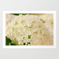 Vintage Nature Botanical White Hydrangea Flower Head Art Print