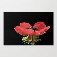 Red Anenome Canvas Print