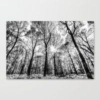 The Forests Sketch Canvas Print