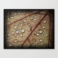 A Close Up Of A Wet Leaf Canvas Print