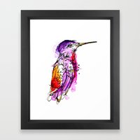 Fuchsia Hummingbird Framed Art Print