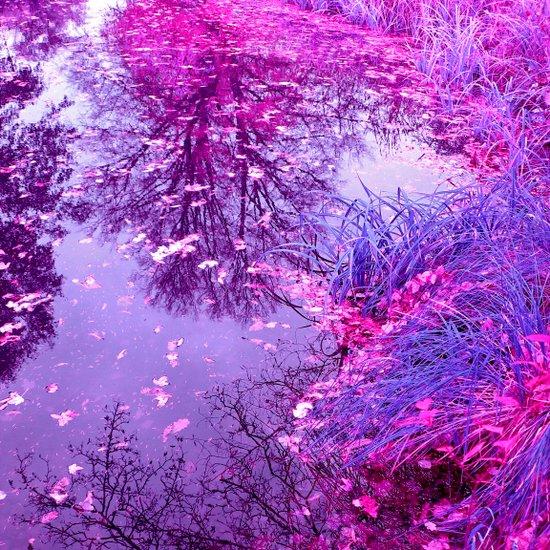 purple garden pond II Canvas Print
