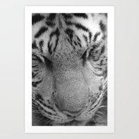 Le Tigre Pendant Sa Sies… Art Print