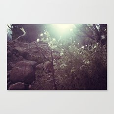 Magical Beings - New Mexico Canvas Print
