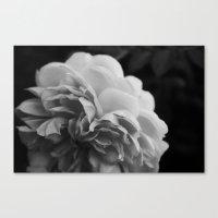 Wildeve Rose No. 2 - Black & White Canvas Print