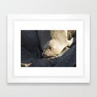 Elephant Seal: Contentment Framed Art Print