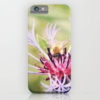 Spring Time Bumble Bee on a Purple Flower iPhone 6 Slim Case