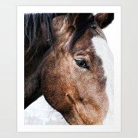 Equine Trance Art Print