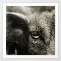 Goat. Art Print