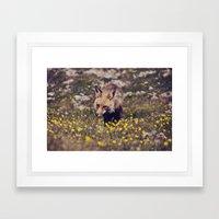 Summer Fox Framed Art Print
