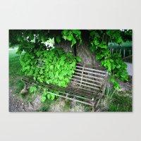 Ivy Bench Canvas Print