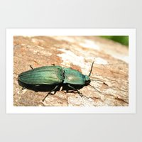 Bug On A Log Art Print