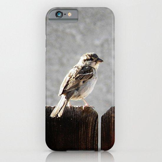 Sparrow iPhone & iPod Case