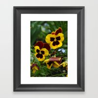 Dear Pansy Framed Art Print