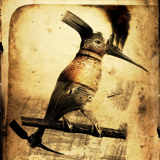 Coalminer Bird Canvas Print