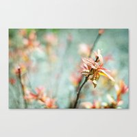 Color Bloom Canvas Print