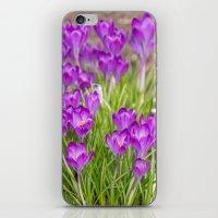 Spring crocus  iPhone & iPod Skin