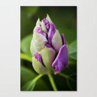 Gleaming Bud Canvas Print